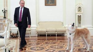 Japonların 'damat' talebine Putin'den ret!