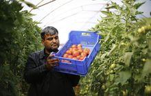 Antalya çiftçisi Rusya'dan haber bekliyor