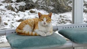 Gümüşhane'de yapılan klimalı durağı kediler de çok sevdi