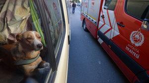 Antalya'da mahsur bırakılan köpek kurtarıldı