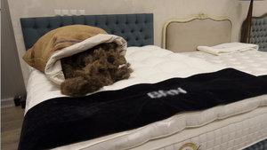 At yelesinden yatak üretti Kraliyet Ailesi'ne satıyor