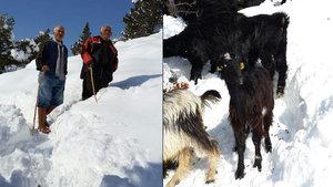Karaman'da 150 keçiyle mağarada mahsur kaldı
