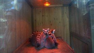 Antalya'da hayvanları soğuğa karşı böyle koruyorlar