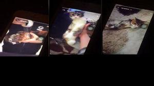 Kediyi bantlayıp eğlenen vicdansız genç kamerada