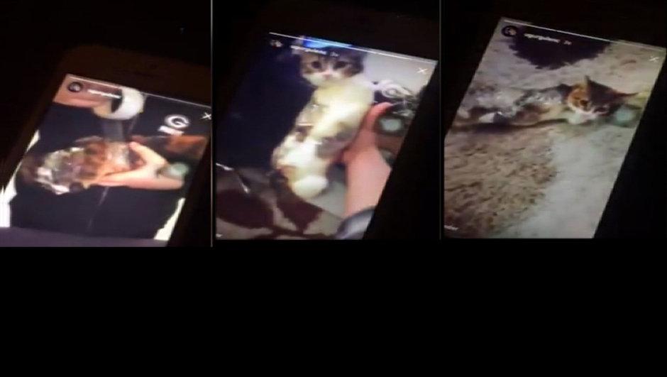 kedi işkence