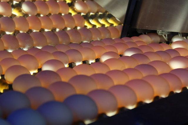 Yumurta kabuğunu fırına koyun sonra da fırında pişirin!
