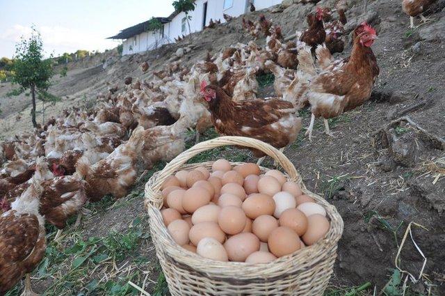 Yumurta kabuğunu fırına koyun sonra da...