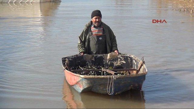Mersin'de Sel suları altında kalan seralarda sandallarla hasat yaptılar