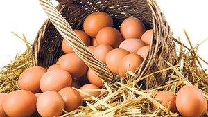 Yumurtada ihracat tutarı 300 milyon dolara dayandı