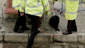 """Şehit polis Fethi Sekin'in köpeği """"Zeytin"""" de öksüz kaldı"""