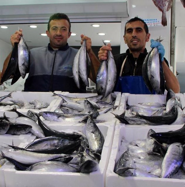 Palamut avında bu sezon rekor kırıldı