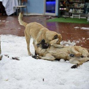 Mama verilen köpeklerin mutluluğu kamerada