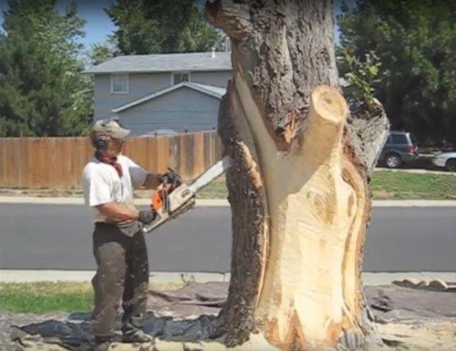 Ağaçtan sanat eserine!