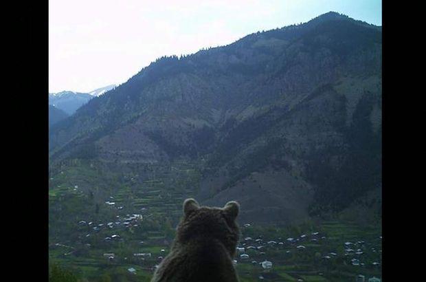 Ayı köyü izlerken böyle görüntülendi!