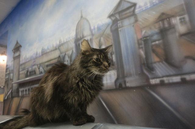 Avrupa'nın en büyük kedi kafesi