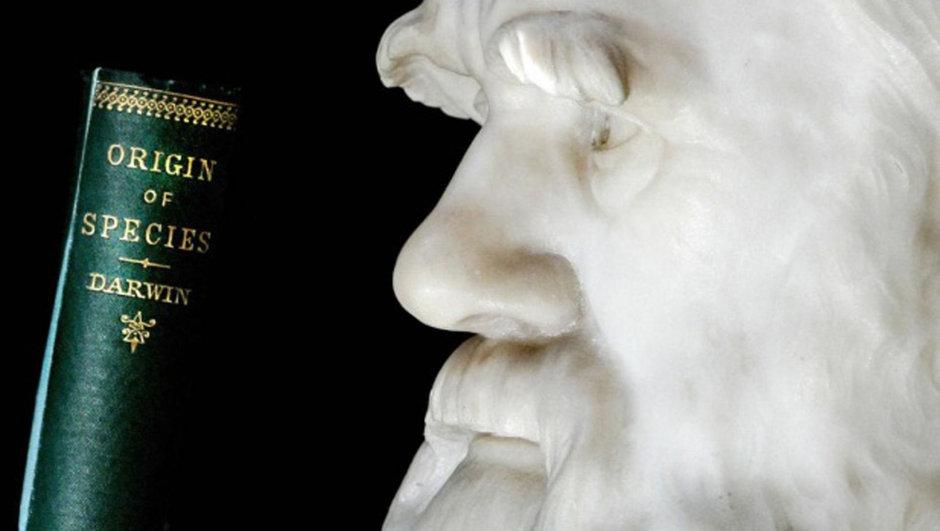 Evrim Teorisi Darwin müfredat