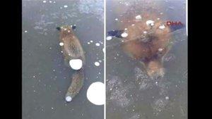 Avrupa'da hayvanlar soğuktan donuyor!