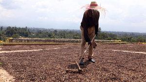 Etiyopya'da kahve işçilerinin emek mücadelesi