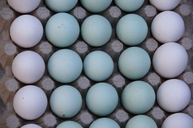 Bu şehirde saniyede bir koli yumurta üretiliyor