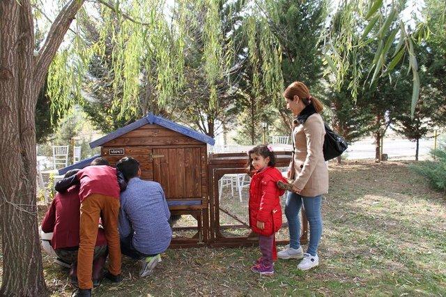 Mavi yumurta Türkiye'de üretilecek