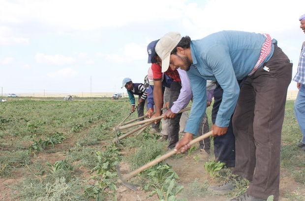 Türkiye'de kaç Suriyeli çalışıyor