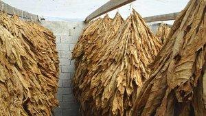 Tütün ve tütün mamulleri ihracatı 1 milyar doları aştı