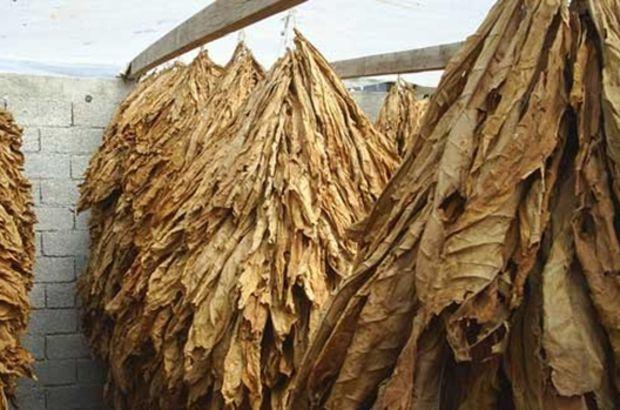 Ege İhracatçı Birlikleri,tütün ve tütün mamullerinin ihracatının 1 milyar doları aştığını ifade etti
