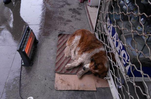 Kırıkkale'de esnaftan, üşüyen köpeğin altına paspas, önüne ısıtıcı