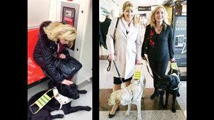 Türkiye'nin ilk rehber köpeği 'Kara' yollarda!