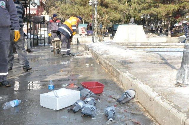 Kırıkkale'deki güvercin katliamının nedeni belli oldu