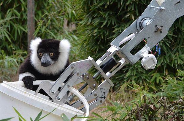 GÖKTÜRK'lerin robotu Faruk Yalçın Hayvanat Bahçesi'nde