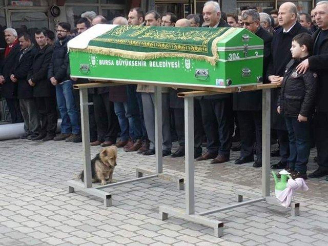 Bursa'da vefakar köpek, ölen sahibinin mezarından ayrılmıyor