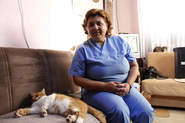 Elazığ'da nöbet geçiren kedi için belediye ve üniversite seferber oldu