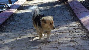 Vefakar köpek, ölen sahibinin mezarından ayrılmıyor