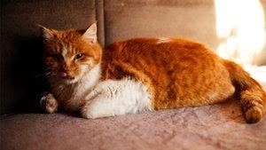 Nöbet geçiren kedi için belediye ve üniversite seferber oldu