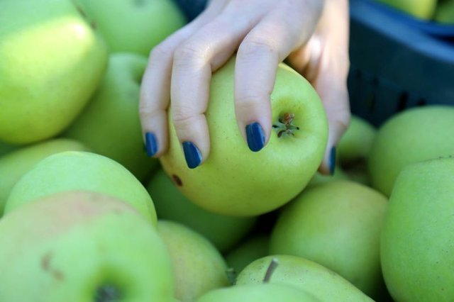 Kararmayan GDO'lu elmalar geliyor!