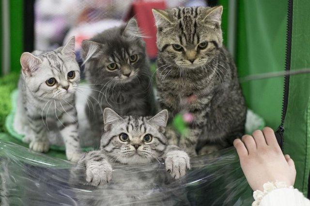 Kediler de köpekler kadar zeki!