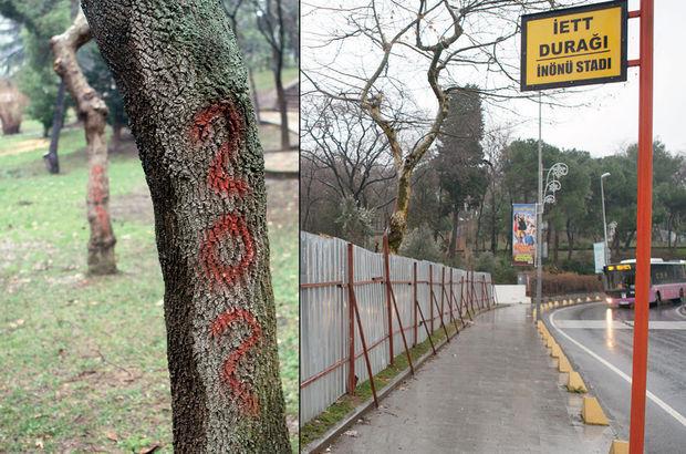 Maçka Parkı'nda da işaretli ağaç vakası