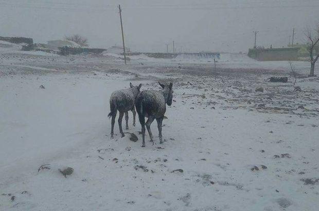 Şanlıurfa'da eşekler buz tuttu