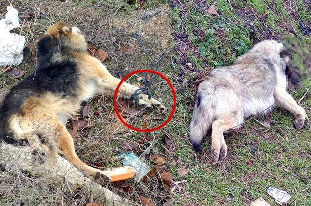 Tekirdağ'da kedilerin ardından bu kez iki köpek başlarına sert bir cisimle vurularak öldürüldü