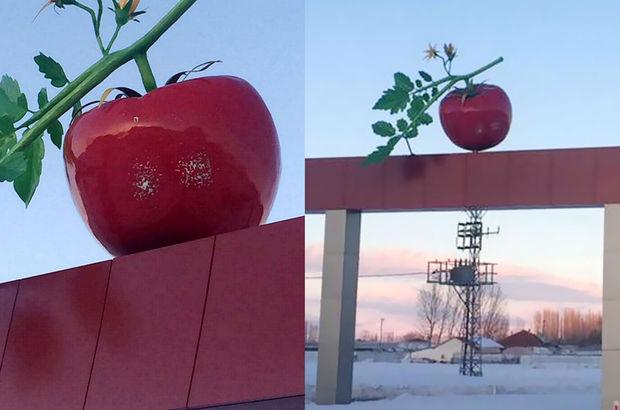 Burdur'un Çavdır ilçesinde domates simgesine silahlı saldırı