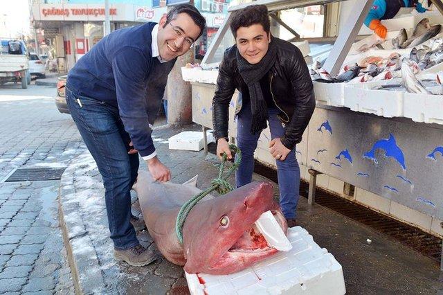 Manisa'da balıkçı tezgahındaki 197 kiloluk köpek balığı ilgi odağı oldu