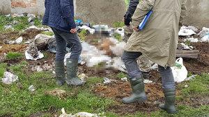 Arnavutköy'deki köpek cesetlerinin altından vahşet çıktı