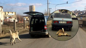 Tekirdağ'da köpeğini aracın arkasına bağlayıp sürükleyen şahsa ceza