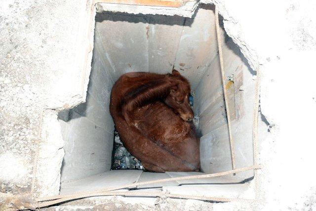 Aksaray'da düştüğü kuyuda mahsur kalan at kurtarıldı