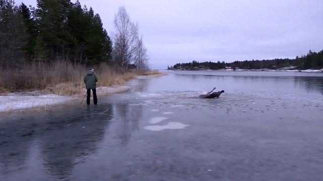 Buz tutan göle düşen geyiği buzları kırarak kurtardılar