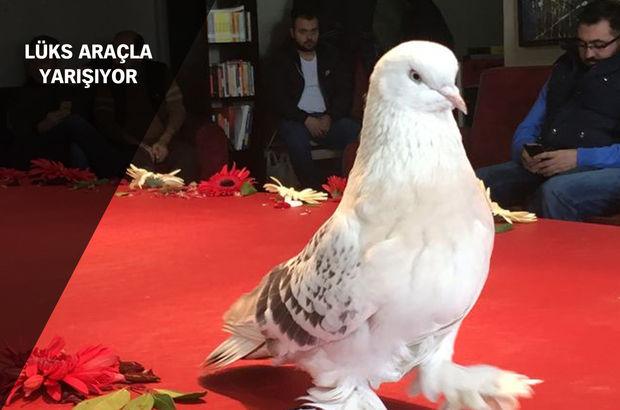 İstanbul Şebap Güvercin Derneği