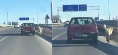 Köpeğe trafikte iple yapılan işkence kamerada!