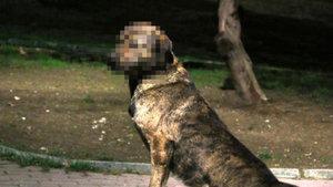 Beşiktaş'ta sokak köpeğine cinsel istismar iddiası