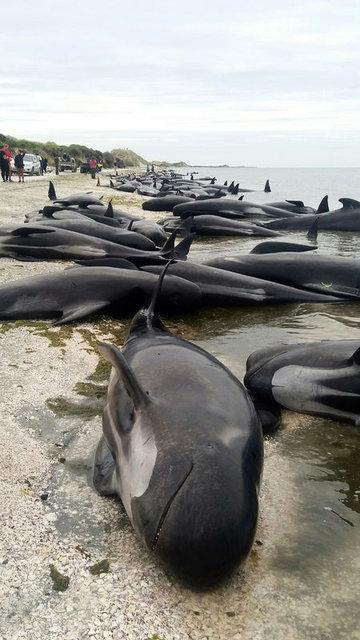 Okyanus kenarında kahreden görüntü!